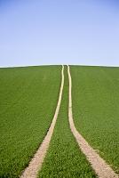 緑の丘と2本の道