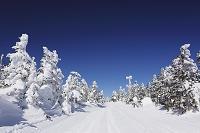 群馬県 長野県 樹氷の渋峠