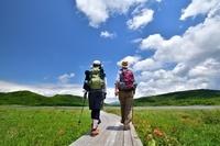 花の湿原を歩くハイカー
