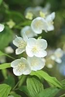 静岡県 安倍峠 山中に咲く花