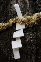 御神木の注連縄と紙垂