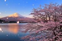 山梨県 朝焼けに染まる富士山と河口湖畔の桜