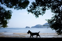 海辺の子犬 瀬戸内