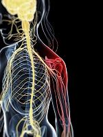 人体 神経