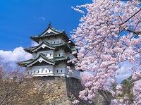 青森県 弘前城 桜