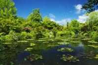高知県 モネの庭 マルモッタン