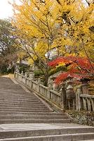 香川県 金比羅町 金比羅山