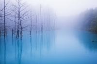 北海道 霧がかる青い池