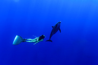 ミナミハンドウイルカと泳ぐ女性スイマー