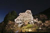 奈良県 佛隆寺の千年桜のライトアップ