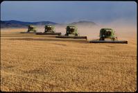 アメリカ モンタナ州 小麦の収穫