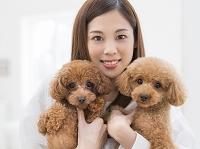 2匹のトイプードル 犬を抱く日本人女性