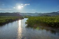 沖縄県 西表島 後良川 マングローブ