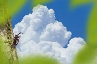 カブトムシと入道雲