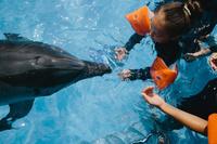 イルカと女の子