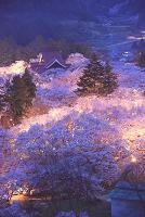 長野県 高遠城址公園 高遠小彼岸桜 高遠閣 夜桜