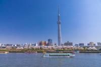 東京都 桜咲く隅田川の遊覧船と東京スカイツリー