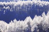 北海道 霧氷の森