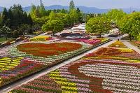 富山県 砺波チューリップ公園