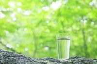 ブナの根元に置かれたグラスの水