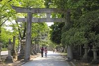 京都府 北野天満宮 新緑の参道と石鳥居