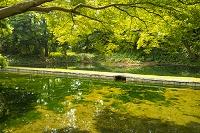 小石川後楽園 西湖の堤