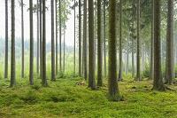 ドイツ ヘッセン 森林