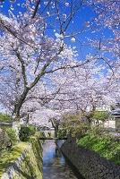 京都 哲学の道