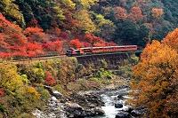 京都府  トロッコ列車
