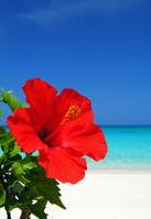 ハイビスカスと夏の海