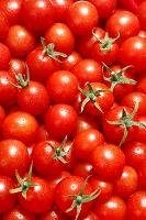 一面のミニトマト