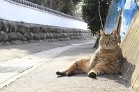 一宮市の猫