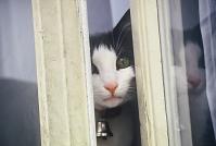 フランス 猫