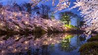 新潟県 高田城の桜