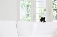 ソファをよじ登る猫