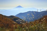 山梨県 櫛形山から望むススキと富士山