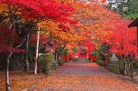 京都府 大原野神社