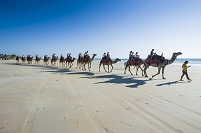 オーストラリア ラクダの行列