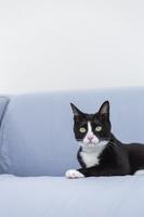 ソファで寛ぐ猫