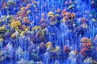 長野県 紅葉の樹林