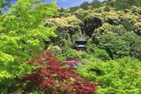 京都府 新緑の永観堂
