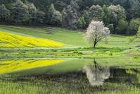長野県 春の中山高原 一本桜