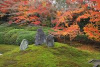 京都府 光明院 本堂から見る波心庭の紅葉