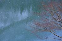 福島県 大沼郡 金山町 奥会津 雪景色と枯れ枝