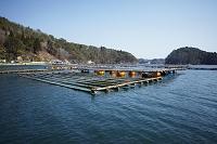 宮城県 牡蠣棚