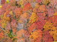 青森県 城ヶ倉大橋から俯瞰する城ヶ倉渓谷の紅葉