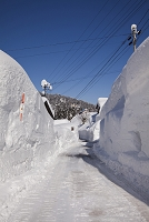 新潟県 豪雪