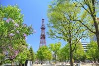 北海道 札幌市 大通公園とさっぽろテレビ塔