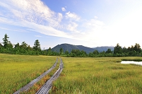 福島県 尾瀬 広沢田代の草紅葉と木道