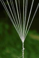 風船の紐の束